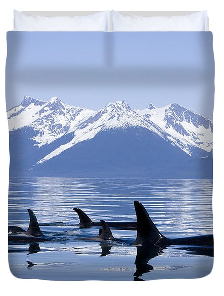 Many Orca Whales Duvet Cover by John Hyde - Printscapes