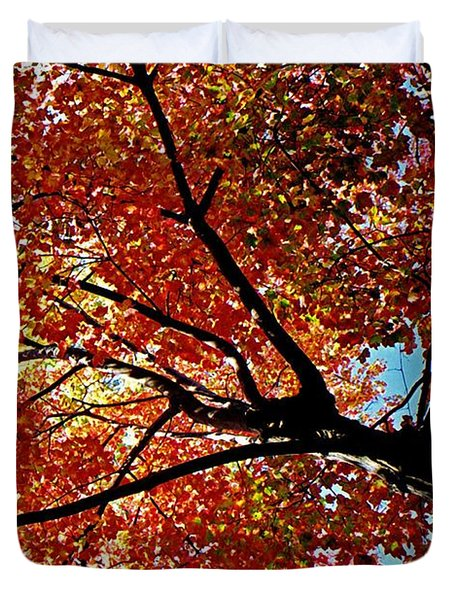 Maple Tree In Autumn Glow Duvet Cover by Juergen Roth