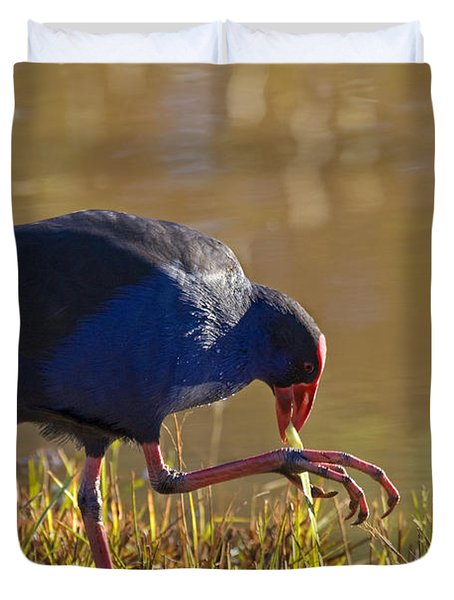 March Of The Swamphen Duvet Cover by Mike  Dawson