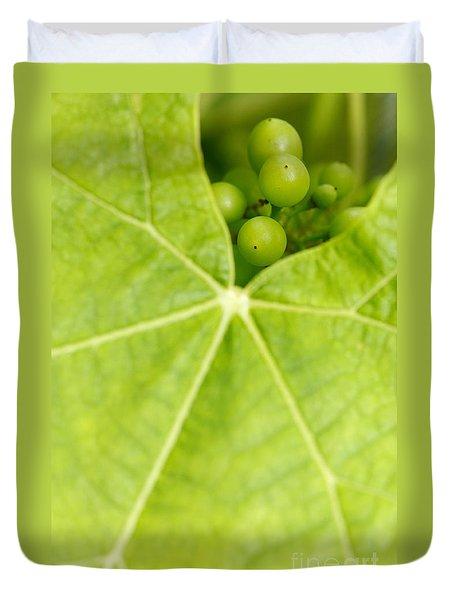 Maturing wine grapes Duvet Cover by Gaspar Avila