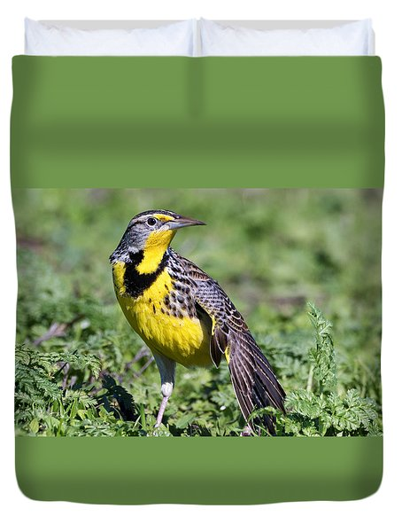Meadowlark On The Runway Duvet Cover by Kathleen Bishop