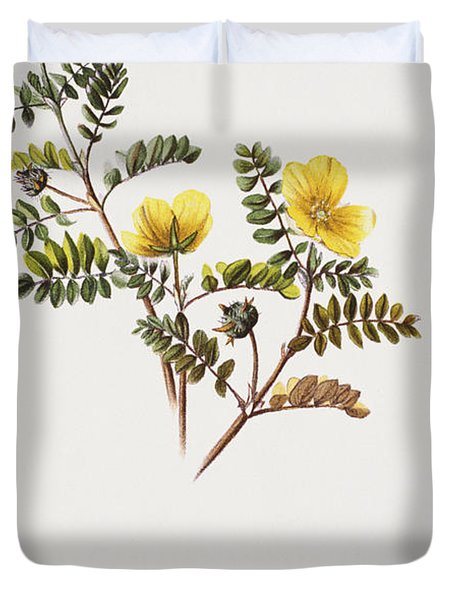 Nohu Flower - Vintage Duvet Cover by Hawaiian Legacy Archive - Printscapes