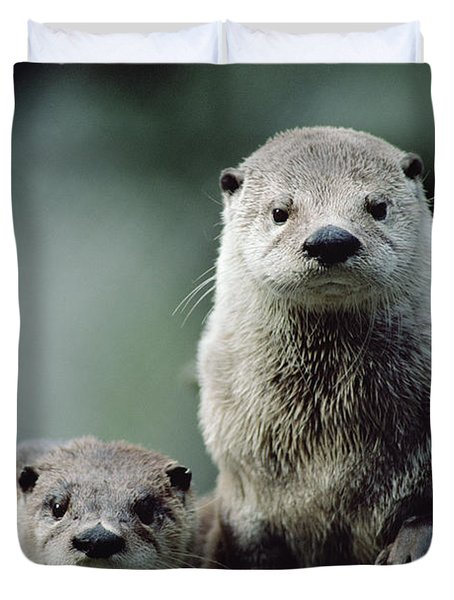 North American River Otter Lontra Duvet Cover by Gerry Ellis