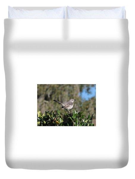 Northern Mockingbird Duvet Cover by Carol Groenen