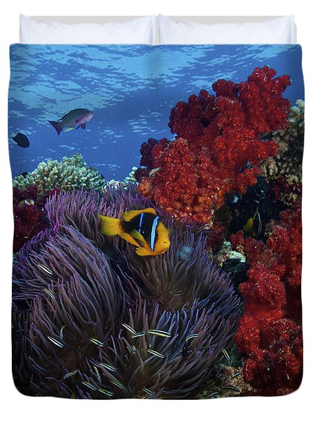 Orange-finned Clownfish And Soft Corals Duvet Cover by Terry Moore