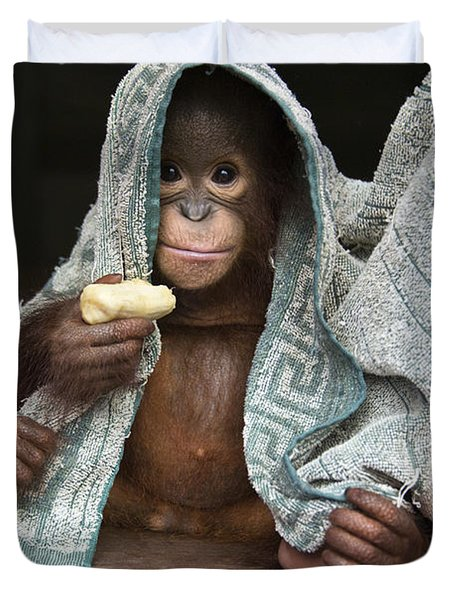 Orangutan 2yr Old Infant Holding Banana Duvet Cover by Suzi Eszterhas