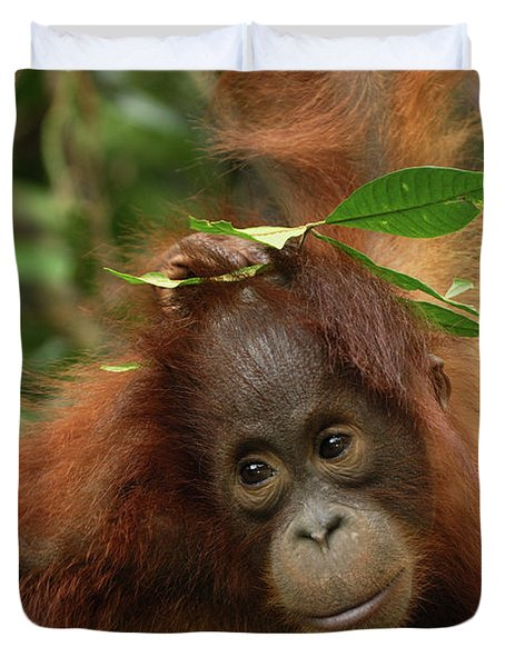 Orangutan Pongo Pygmaeus Baby, Camp Duvet Cover by Thomas Marent