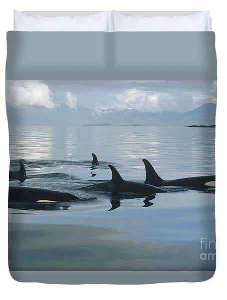 Orca Pod Johnstone Strait Canada Duvet Cover by Flip Nicklin