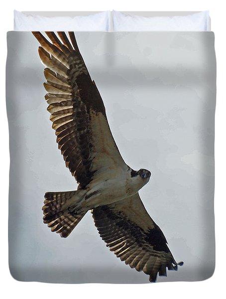 Osprey In Flight Duvet Cover by Ernie Echols