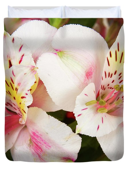 Peruvian Lilies  Flowers White and Pink Color Print Duvet Cover by James BO  Insogna