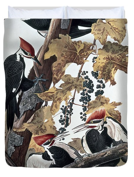 Pileated Woodpeckers Duvet Cover by John James Audubon