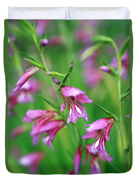 Pink Flowers Of Gladiolus Communis Duvet Cover by Frank Tschakert