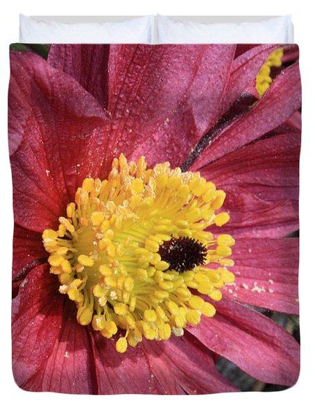 Pink Pasque Flower Duvet Cover by Carol Groenen