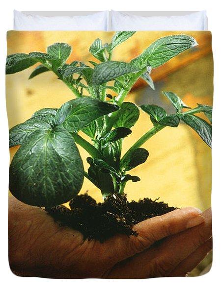 Potato Plant Duvet Cover by Science Source
