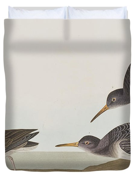 Purple Sandpiper Duvet Cover by John James Audubon
