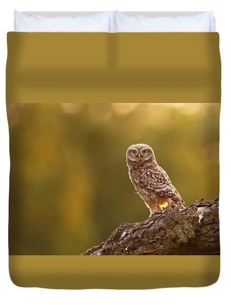 Qui, Moi? Little Owlet In Warm Light Duvet Cover by Roeselien Raimond