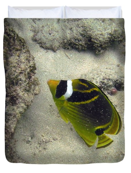 Raccoon Butterflyfish Duvet Cover by Michael Peychich