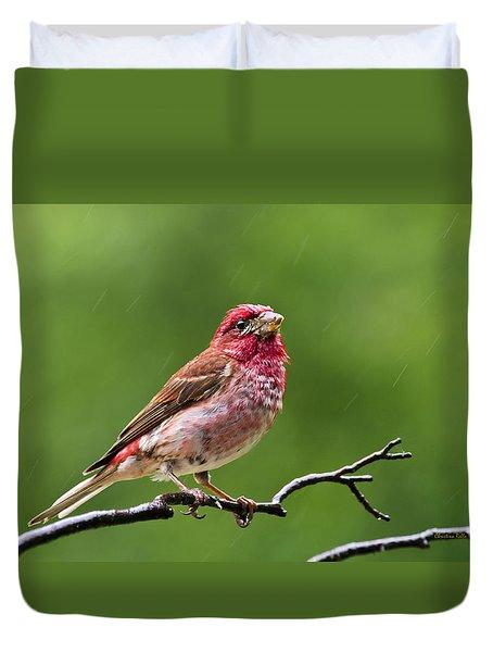 Rainy Day Bird - Purple Finch Duvet Cover by Christina Rollo