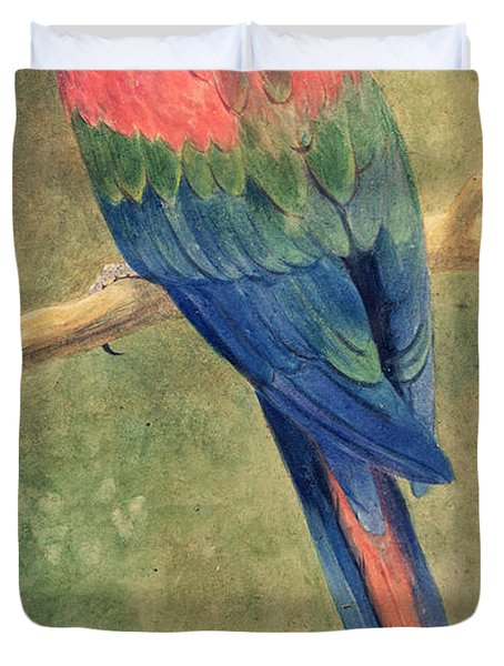 Red And Blue Macaw Duvet Cover by Henry Stacey Marks
