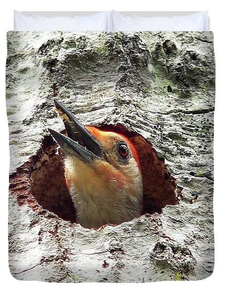 Red-bellied Woodpecker 03 Duvet Cover by Al Powell Photography USA
