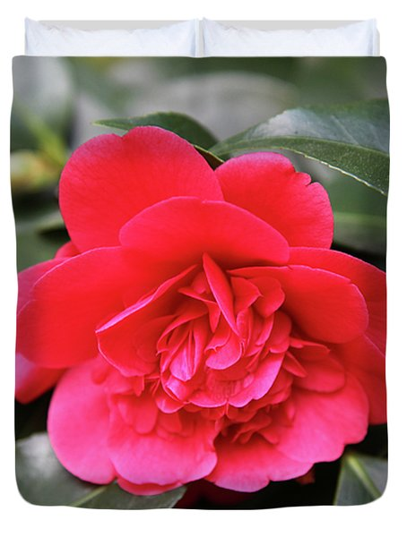 Red Camellia Duvet Cover by Dean  Triolo