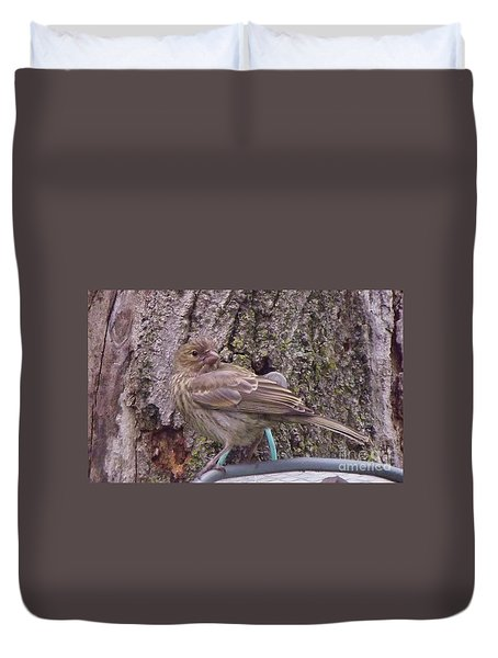 Red Crossbill Female  Indiana  Summer Duvet Cover by Rory Cubel