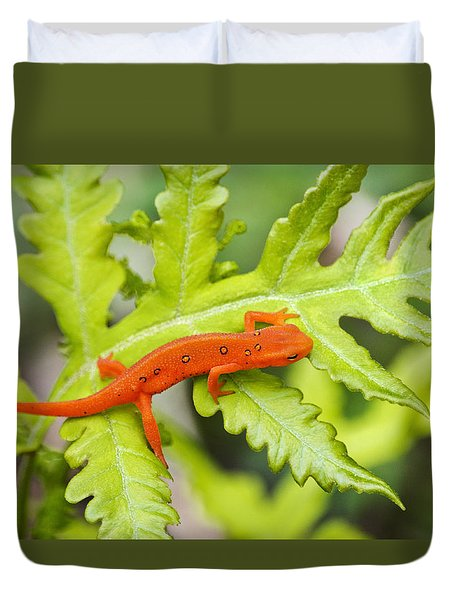 Red Eft Eastern Newt Duvet Cover by Christina Rollo