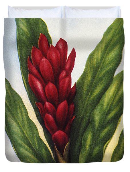 Red Ginger Duvet Cover by Hawaiian Legacy Archive - Printscapes