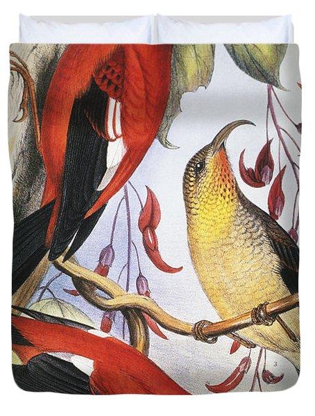 Red Hawaiian Honeycreeper Duvet Cover by Hawaiian Legacy Archive - Printscapes