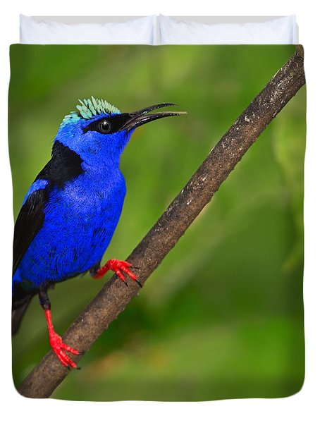 Red-legged Honeycreeper Duvet Cover by Tony Beck