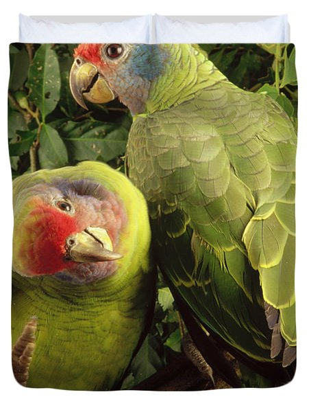 Red-tailed Amazon Amazona Brasiliensis Duvet Cover by Claus Meyer