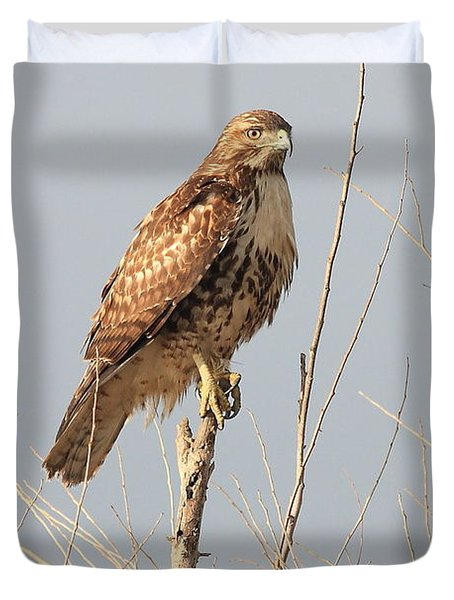 Red-tailed Hawk . 40d11323 Duvet Cover by Wingsdomain Art and Photography