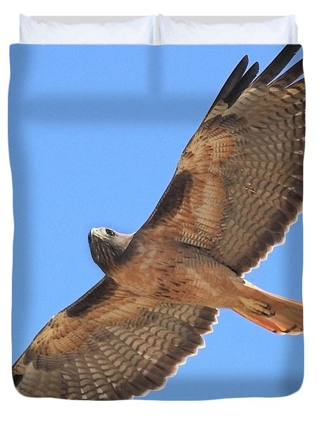 Red Tailed Hawk in flight Duvet Cover by Wingsdomain Art and Photography