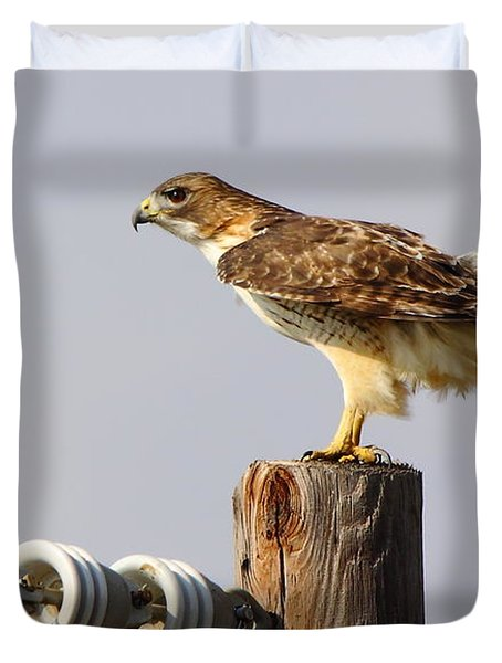 Red Tailed Hawk Perched Duvet Cover by Robert Frederick
