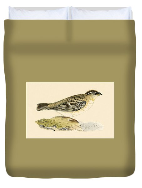 Rock Sparrow Duvet Cover by English School
