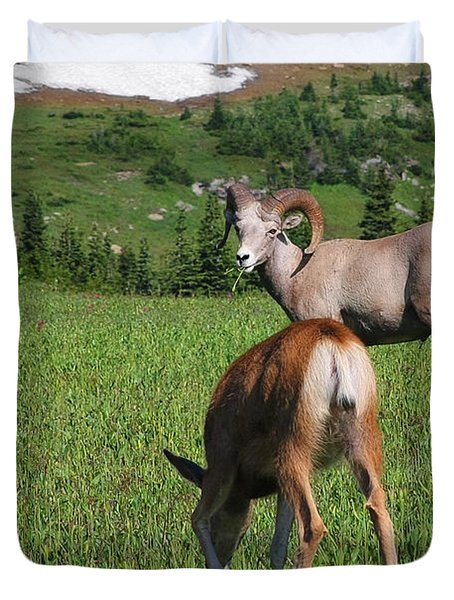 Rocky Mountain Bighorn Sheep Ram And Mule Deer Doe Glacier National Park Mt Duvet Cover by Christine Till
