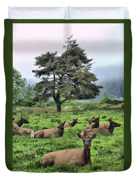 Roosevelt Elk Lounging Duvet Cover by Nena Trapp