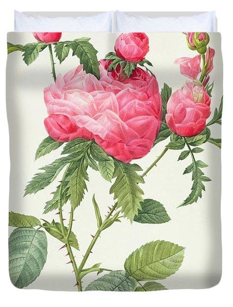 Rosa Centifolia Prolifera Foliacea Duvet Cover by Pierre Joseph Redoute