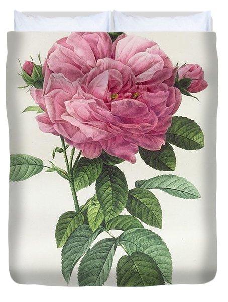 Rosa Gallica Flore Giganteo Duvet Cover by Pierre Joseph Redoute