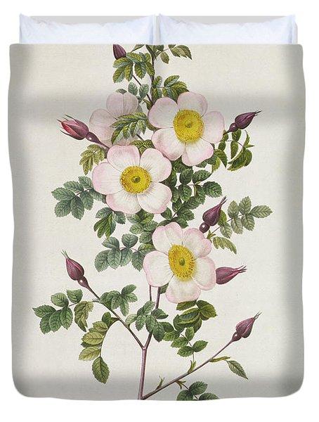 Rosa Pimpinelli Folia Inermis Duvet Cover by Pierre Joseph Redoute