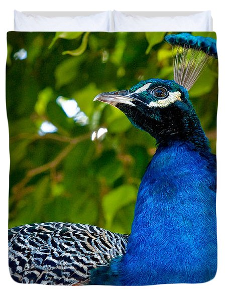Royal Bird Duvet Cover by Christopher Holmes