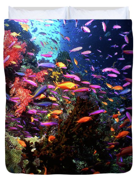 Scalefin Anthias Fish In Coral Garden Duvet Cover by Beverly Factor