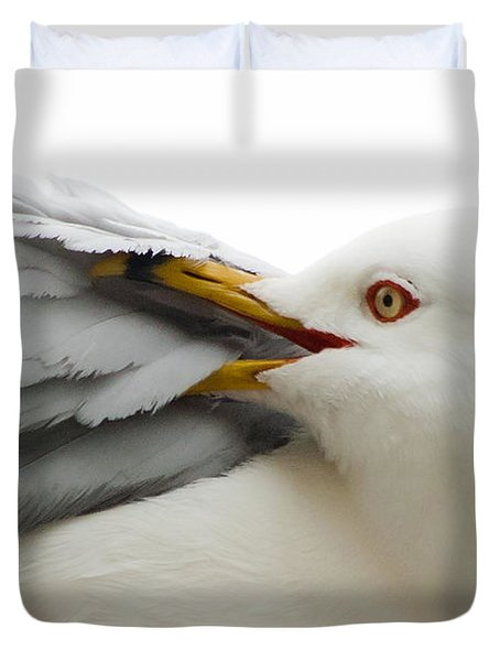 Seagull Pruning His Feathers Duvet Cover by Keith Allen