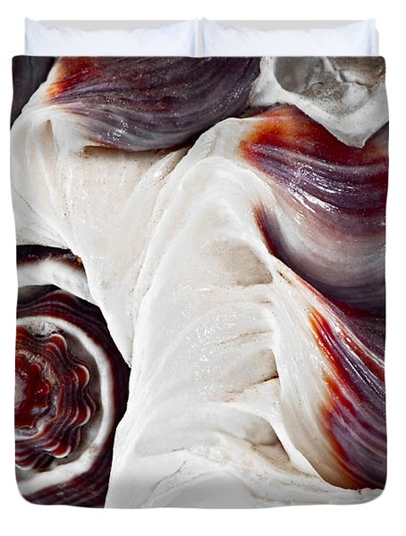 Seashell detail Duvet Cover by Elena Elisseeva