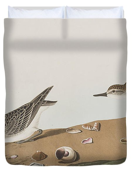 Semipalmated Sandpiper Duvet Cover by John James Audubon