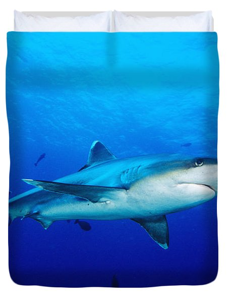 Silvertip Shark In Thailand Duvet Cover by Dave Fleetham - Printscapes