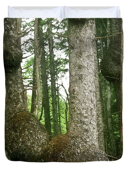 Sitka Spruce Burls on the Olympic Coast Olympic National Park WA Duvet Cover by Christine Till