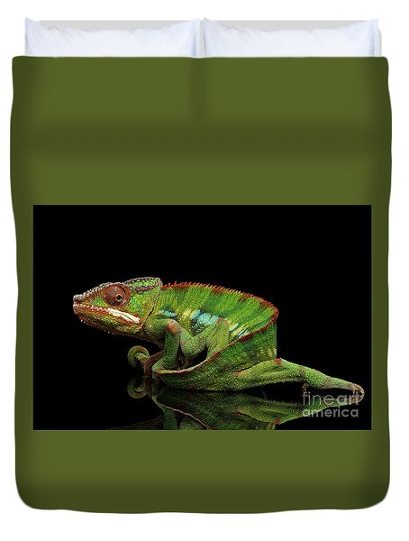 Sneaking Panther Chameleon, Reptile With Colorful Body On Black Mirror, Isolated Background Duvet Cover by Sergey Taran