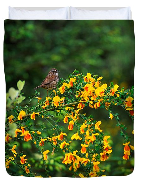 Song Sparrow Bird On Blooming Scotch Duvet Cover by Panoramic Images