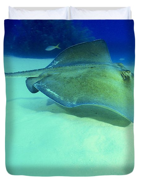 Southern Sting Ray Duvet Cover by Gregory Ochocki and Photo Researchers